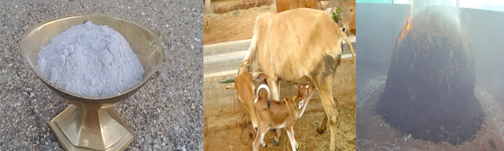 Vibhuti prepared from Indian breed cows through Viraja Homam