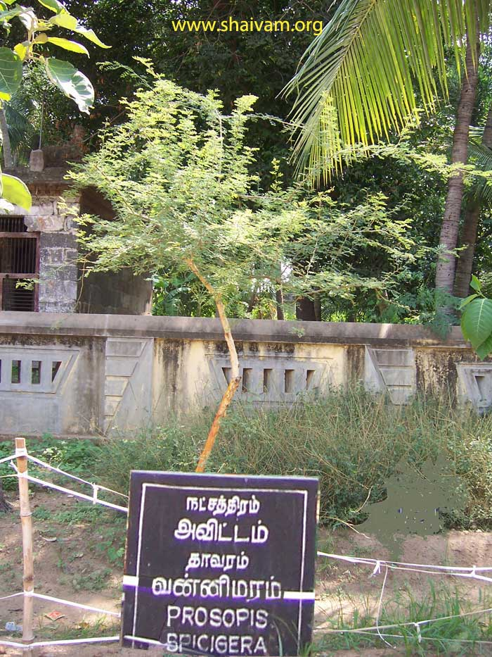 Pictures of thala vruksha (Trees of temples)