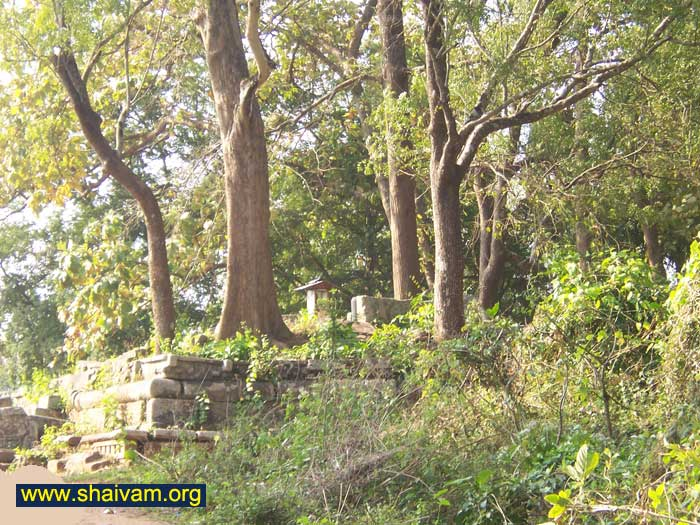 trees are on base of old temple