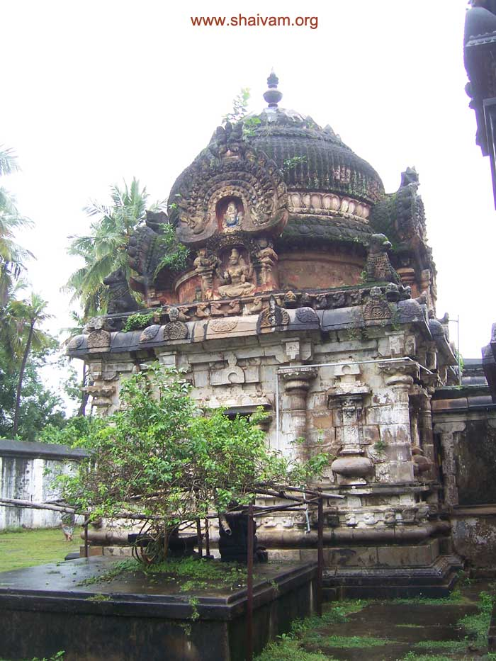 view the vimAnA